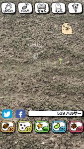 ハルサーの畑_2