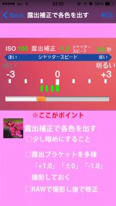 コスモス撮影_3