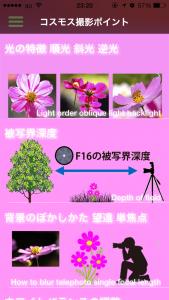 コスモス撮影_2