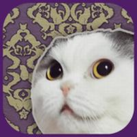 猫託~猫からのメッセージ~
