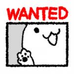 猫探してます